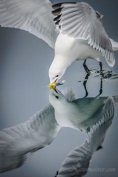 Seagull mirror.