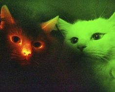 glow-in-the-dark cats
