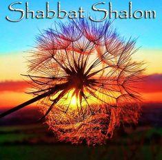 Quotes Positive Future Lets Go 16 Best Ideas Bon Sabbat, Good Shabbos, Kristen Ashley Books, Shavua Tov, Arte Judaica, Shabbat Dinner, Happy Sunday Quotes, Happy Sabbath, Fb Quote