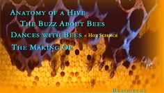Tales from the Hive: A NOVA online guide for educators about honeybees and their behavior. Great resource with amazing photos and videos. Amazing Photos, Cool Photos, Bee Facts, Honey Shop, Bee Do, Birds And The Bees, Eric Carle, Honey Bees