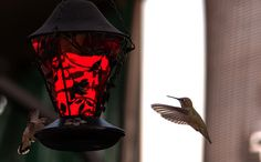 On Guard | Flickr - Photo Sharing!