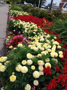 "Its' very important to ""deadhead"" your flower beds in order to encourage new, fresh color.  Great example here"