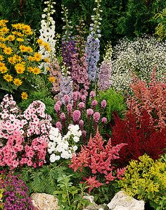 Perennials - back left to right  yellow gailardia sun apricot, foxglove, pink garden phlox, pink liatris floistan violet,Astilbe, yellow lady's mantle Alchemilla vulgaris
