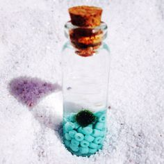 A personal favorite from my Etsy shop https://www.etsy.com/listing/236419543/turquoise-marimo-moss-ball-vial-of-life