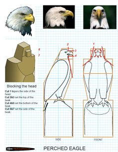 Chainsaw carving patterns free Preched Eagle 3/3
