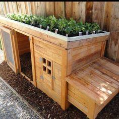 Herb garden on roof of chicken coop