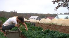"""It's the newest trend in luxury housing: the """"agrihood."""""""
