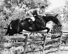 """Rodney Jenkins in an appointment class on one of his great hunters back in the day. His balance is beautifully centered and his position is exemplary. Notice his soft contact with the horses mouth.""~ Bernie Traurig"