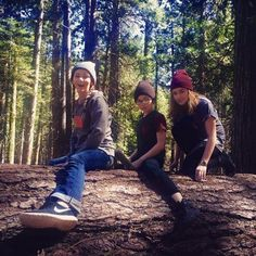 Calaveras Big Trees State Park - Arnold, CA, United States. Three little monkeys