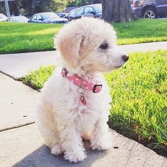 Pretty in Pink by tobyadamspets Dog Leash, Pretty In Pink, Dogs, Instagram Posts, Animals, Animales, Animaux, Doggies, Animais