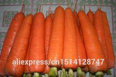 Vegetable seeds Daucus carota, semilla de zanahoria, ginseng Wucun zanahoria, cerca de 50 partículas