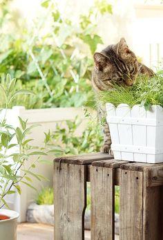 aentschies Blog: Unser Katzenbalkon – Die Pflanzen