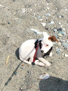 #polly in spiaggia