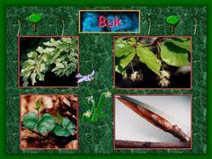 PPT - Warstwy lasu PowerPoint Presentation - ID:4253051 Presentation, Herbs, Youtube, Herb, Youtubers, Youtube Movies, Medicinal Plants