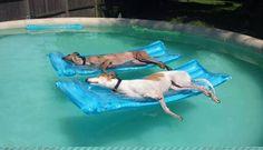 So muss Tierischer-Urlaub! PUNKT com Urlaub mit Hund, Katze & Co - www.tierischer-Urlaub.com – Google+ #urlaubmithund #urlaubmithaustier #hunde #dogs #funny #lustigebilder #hund #hundefreundlich #urlaub