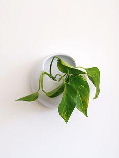 Vaso de Parede Mii Branco - Collector55