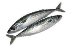 Image result for cornish mackerel