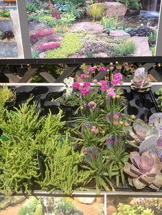Alpine style flowers 2