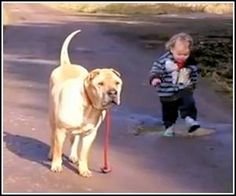 Child walking dog, stops to play in puddle, while the dog patiently waits. I don't know if I love the innocence and pure joy of the child and the puddle or the loyalty of the dog. Love love love.