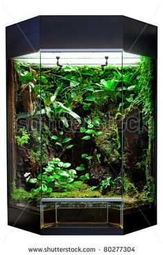 terrarium or vivarium for keeping rainforest animal such as poison frog and lizards. Glass habitat pet tank with green moss and jungle vegetation. Tropical animal cage. by Dirk Ercken, via ShutterStock