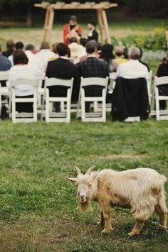 every wedding needs a goat!!! :p
