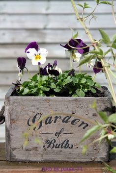 "Pansies are anything but pansy  ORNATE BOXES WORK SO WELL WITH ""FLOWERS!"""
