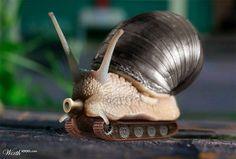 Love the robotic animals - Battle Snail.