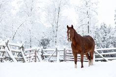 llbwwb:  For the horse lovers:) Winter Wonderland… (by Tina M89)