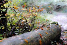Autunno 2015 - Foto scattata nei boschi di Zone