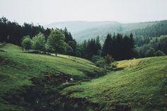 Naturama - dpcphotography:   Upper Derwent Valley