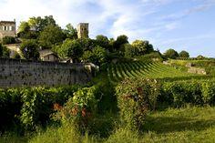 Vineyard, St Emilion - France