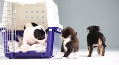 Watch: Kittens Meet Puppies For The First Time - DesignTAXI.com