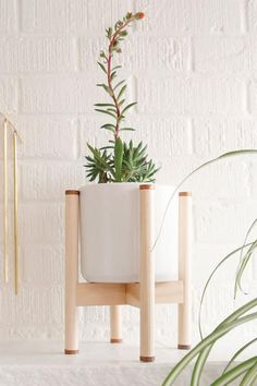 Lulu Plant Stand Juniper Plant, Front Porch Plants, Driftwood Wall Art, Eclectic Style, Accent Pieces, Earthy, A Table, Mid-century Modern, Aster