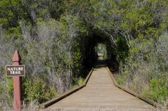 Wild Heron Nature Trails.Betsy Hulsey, Realtor,  Beachy Beach Real Estate