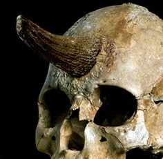 Strange Skull with Horns and other odd finds.