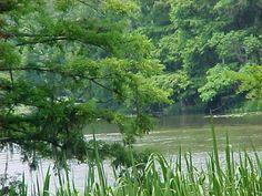 Sabine River niblletts bluff park near la tx border