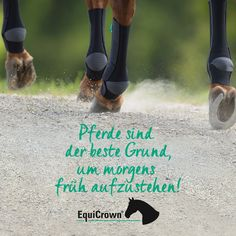 Horses are the best reason to get up early in the morning! EquiCrown: Your partner in the . Equine Quotes, Horse Quotes, Get Up, How To Get, Animal Pictures, Cute Pictures, Doria, K Om, Reiki Symbols