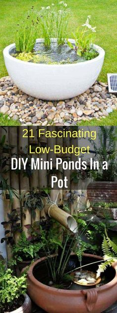 21 Fascinating Low-Budget DIY Mini Ponds In a Pot #Ponds