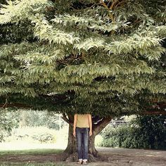 Think like a tree. by David Foster Nass