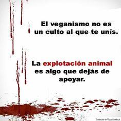 El veganismo es simplemente el no-especismo. https://es.wikipedia.org/wiki/Especismo