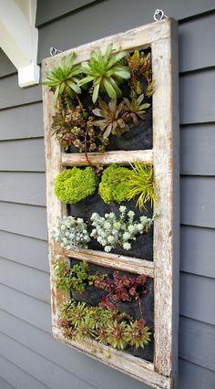 succulent garden in old window