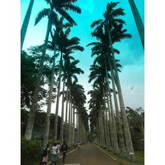 Aburi Botanical Gardens opened in 1890. Location: Aburi Ghana. It's a wonderful place to appreciate nature...... Get out of town and experience something new!  #ghana #aburi #getaways #gardens #nature #travels #weekends #vacations #events #outdoors by ghanaeventscenter