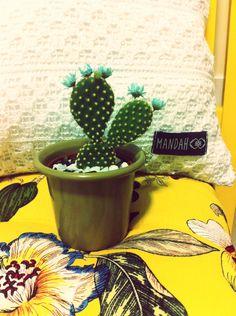 Amor por cactus!