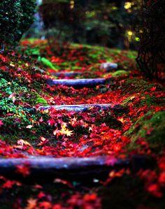 Forest Path, Kyoto, Japan photo via thenu Forest Path, Forest Trail, Japan Photo, World Of Color, Garden Paths, Belle Photo, Amazing Nature, Beautiful World, Beautiful Things