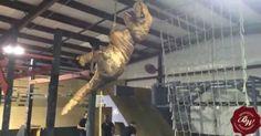 Der nächste Teil dieser Dino-Filme heisst Jurassic Parkour: American Ninja-Saurus