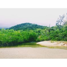 To where two World Heritage listed areas meet. Welcome to where the Great Barrier Reef and the Daintree Rainforest intersect! #explore #travel #nature #landscape #worldheritage #unesco #greatbarrierreef #daintree #capetribulation #QLD #vscocam  by ninah31 http://ift.tt/1UokkV2