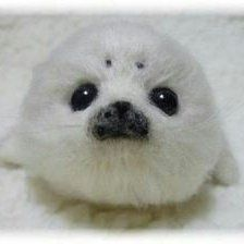 a baby harp seal Needle Felted Animals, Felt Animals, Needle Felting, Animals And Pets, Baby Animals, Cute Animals, Baby Harp Seal, Baby Seal, Cute Seals