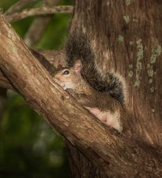 Time for Rest Photo by Karen Jacobs Cook -- National Geographic Your Shot