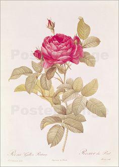 Die Rose hat eine hohe Symbolkraft und erinnert in Form eines Kunstposter an Liebe, Zuneigung und Schönheit.