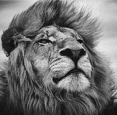 pinterest.com/fra411 #graowr - Lion King